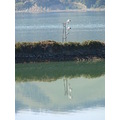 reflectionthursday rail dunedin port chalmers bays harbour littleollie