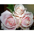 three roses...for me....from Alina....