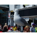 where there's a chip there's also a seagull!!