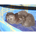 kittens cute dunedin littleollie