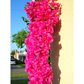 Flowers Bunch Hot Pink jdahi64