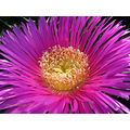 compnature flower pink Andalucia Spain home