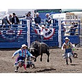 rodeo bullriding clowns bull pankey wildspirit action