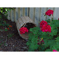 garden basket old home kelmscott littleollie