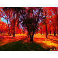 park trees autumn colours archer