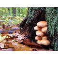 autumn rain mushroom wood nature