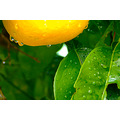 Mother Nature nectar water drops rain perth littleollie