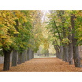 Spain Burgos Trees Autum Parral