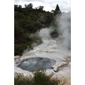 I thought these boiling hot pools at Te Puia are amazing. 