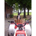 Cleo is trying to ride my Quad!
