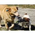 dogs playing animals pets games action