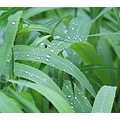 raindrops water greenery