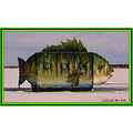 Fish Perch Ice Fishing Devils Lake North Dakota