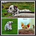Familypetfriday please enlarge