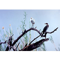 africa botswana chobenationalpark nature birds