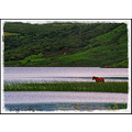Horse CArragh_lake Kerry Ireland Peter OSullivan