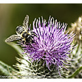 Nature wildlife flower macro closeup
