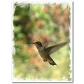 birdfriday funfriday hummingbird rubythroat imature bird