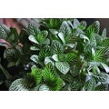 plants garden leaves leaf green nature environment green plant