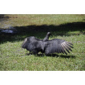 kennedy space center florida nasa vulture