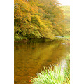 landscape exmoor autumn barle valley