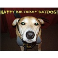 batdog dog birthday