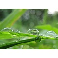 grass macro drop drops rain raindrop raindrops