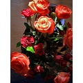 flowers red roses