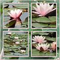 Paleis Soestdijk waterlily nature flower
