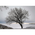 winter canada lakewinnipeg manitoba
