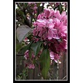 Spring tree bloom blossom floral flower plum nature ornamental