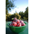 California Bonny Doon fruit summer