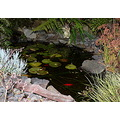 fishpond pond water garden goldfish