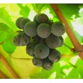 6/13