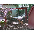 my mom spent Easter with us.. got into my hammock and fell asleep.  i covered her up and took th...