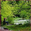 donadea forest trees lake umbrella