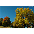 stlouis missouri us usa landscape fall tree sky blue gold 2007
