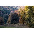 Budapest Hungary Buda mountain forest autumn nature