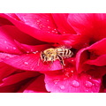 red bee flower