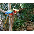 Beautiful parrot at the zoo