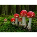 Mushrooms beautiful wild nature creation forest tree plants