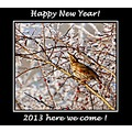 redwing frost bird carlsbirdclub nature winter 2013 happynewyear