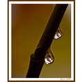 drops fall reflections glassicas
