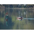 reflectionthursday archives sail Otago Harbour littleollie