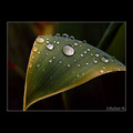 leaf water drop rain