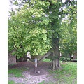 Holland - Santpoort Noord 