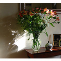alstroemeria shadows