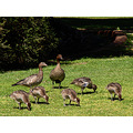 family stroll ducks park kings park perth littleollie