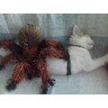 spider meets sleeping kitten