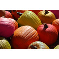 multi color pumpkins